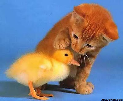 Image result for kindness animals
